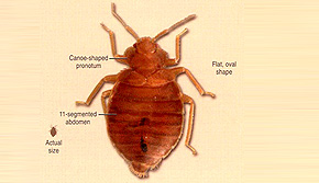 Bed Bug Pest Control Perth